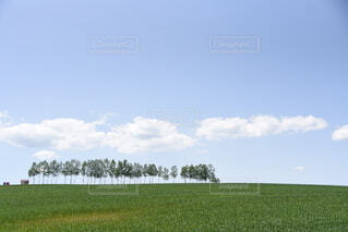 北海道美瑛の丘の写真・画像素材[4043578]