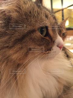 猫の写真・画像素材[616726]