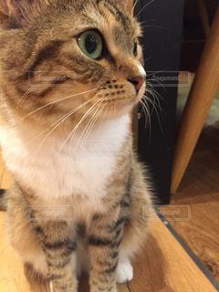No.616729 猫