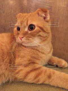 猫の写真・画像素材[616730]