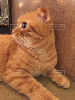 猫の写真・画像素材[616731]