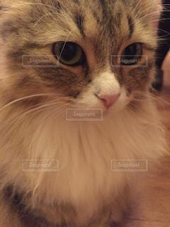 猫 - No.616732