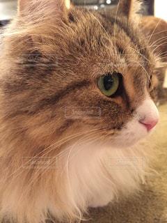 猫の写真・画像素材[616762]