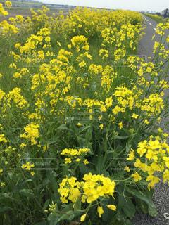 春の写真・画像素材[616841]