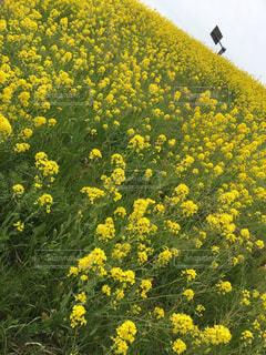 春の写真・画像素材[616846]