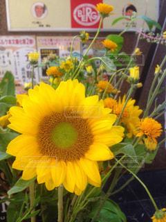 花 - No.617200