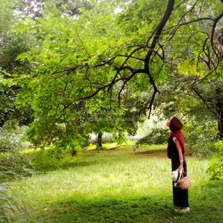 森林 - No.617355