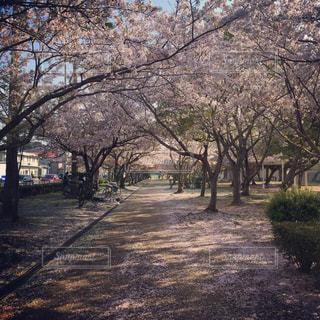 公園の写真・画像素材[617821]