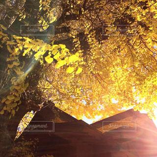 秋の写真・画像素材[618311]
