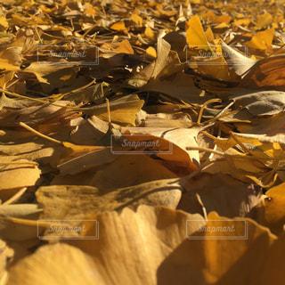 秋の写真・画像素材[618313]