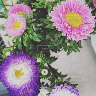 紫色の花一杯の花瓶の写真・画像素材[733740]