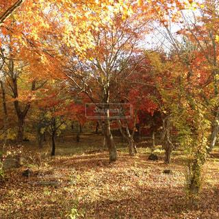 秋の森 - No.734493