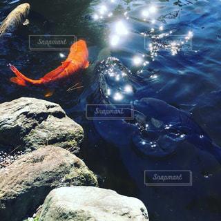 陽光を反射する水面の写真・画像素材[736081]