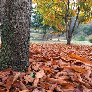木の枝の山の写真・画像素材[736154]