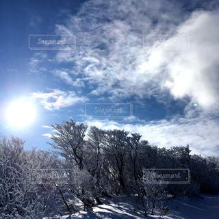 雪に覆われた木の写真・画像素材[736157]
