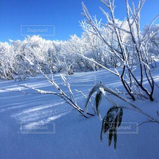 雪山の写真・画像素材[736158]