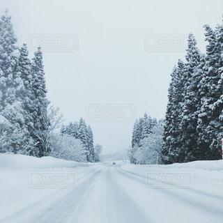 素敵な雪道ドライブの写真・画像素材[736159]