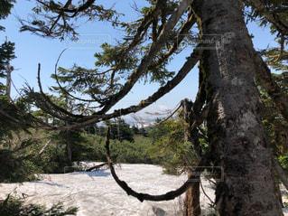 雪渓散策の写真・画像素材[1224702]