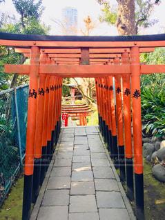 パワースポットとして有名な上野の五條天神社です。たくさん連なる鳥居を撮影しました⛩の写真・画像素材[2005534]