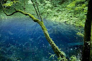 青池の写真・画像素材[765656]