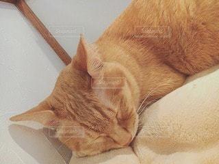猫の写真・画像素材[17758]
