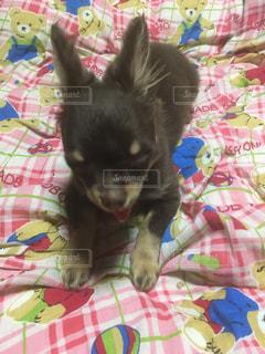 犬 - No.618914