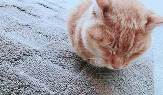 江ノ島の猫の写真・画像素材[1129207]