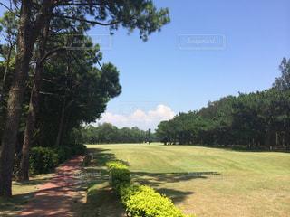 ゴルフの写真・画像素材[652328]