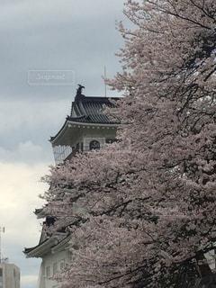 富山城の写真・画像素材[652356]