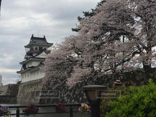 富山城の写真・画像素材[652357]