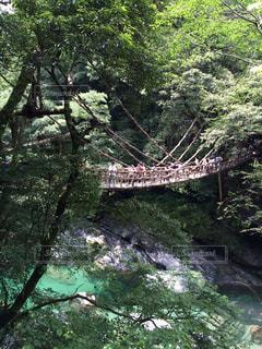 徳島県の写真・画像素材[652734]