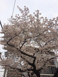 春の写真・画像素材[652774]
