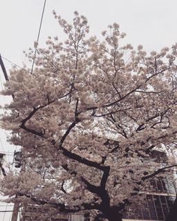 春 - No.652776
