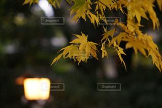 自然の写真・画像素材[261165]