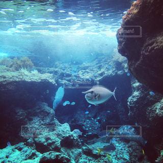 魚の写真・画像素材[619896]