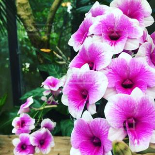 花の写真・画像素材[619897]