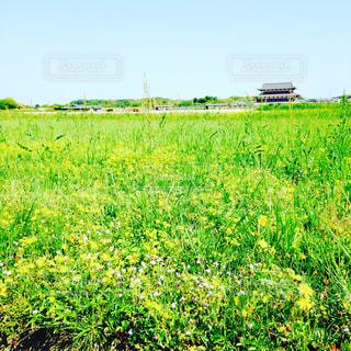 春の写真・画像素材[619898]