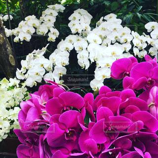 花の写真・画像素材[619899]