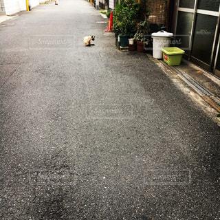 猫の写真・画像素材[619906]