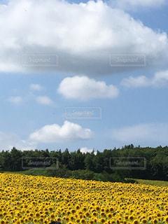 風景の写真・画像素材[688393]
