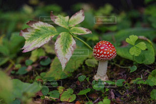 植物の写真・画像素材[622417]