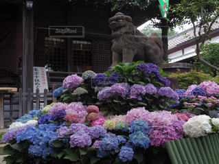 神社の写真・画像素材[622606]