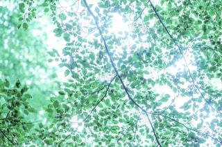 森林の写真・画像素材[640188]