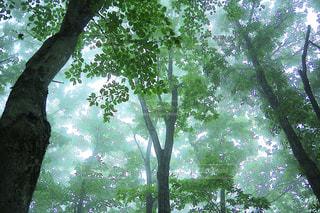 濃霧の森の写真・画像素材[1192674]