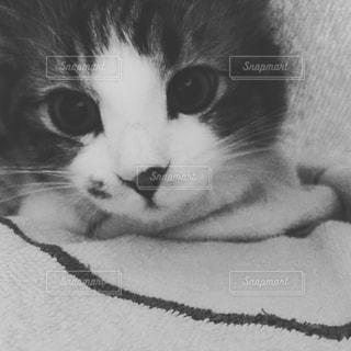 猫の写真・画像素材[620518]