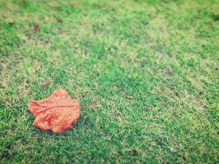 もうすっかり秋。 - No.757112