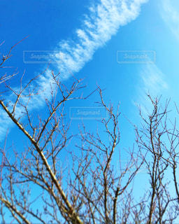 ✳︎✳︎✳︎ 寒空の下で ✳︎✳︎✳︎の写真・画像素材[924842]
