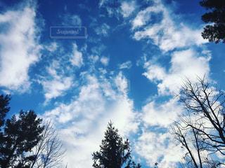 冬空の下***の写真・画像素材[928842]