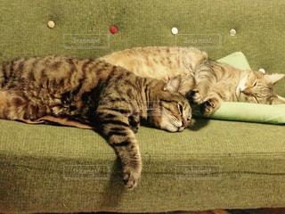 猫の写真・画像素材[621063]
