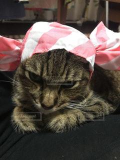 被り物付けさせられた猫の写真・画像素材[1693239]